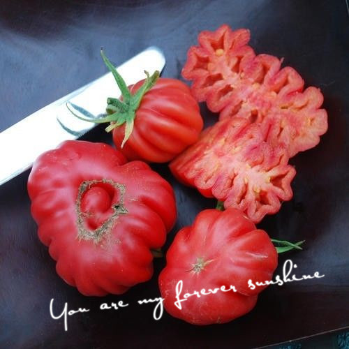 beautiful yard landscapes - Heirloom Zapotec Ruffled Tomato Seeds Vegetable Edible Landscaping Eat Your Beautiful Yard