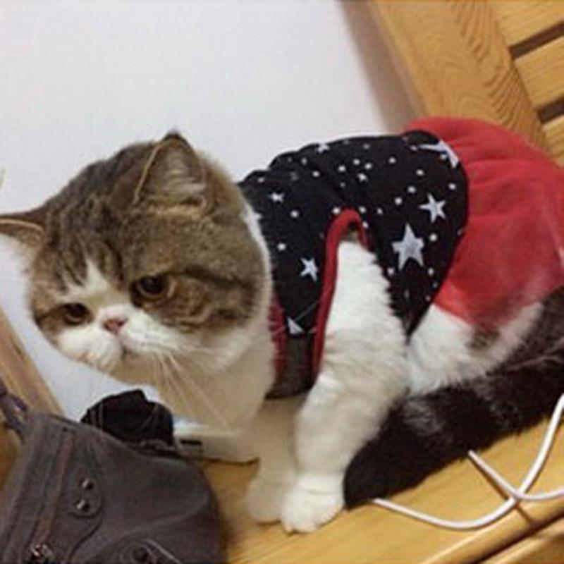 Wholesale Cute Fashion Spring And Autumn Middle Fairy Cat Red Dress Pet Clothes Cat Kimono Gatos