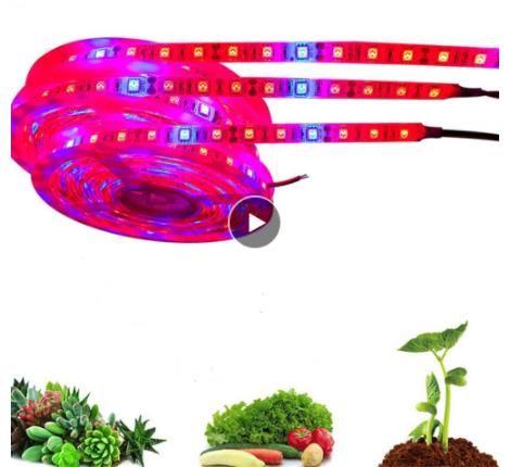 Led grow light strip 5M 5050 Full Spectrum Flower Plant