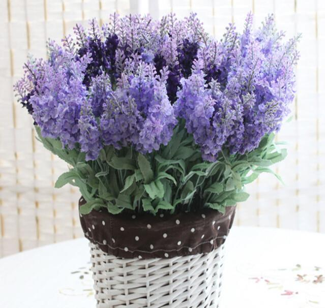 how to cut province lavender plant
