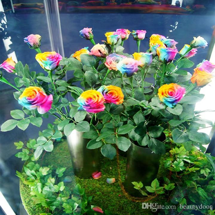 Garden Supplies Rose Flower Seeds Cheap Pink Red Yellow Black