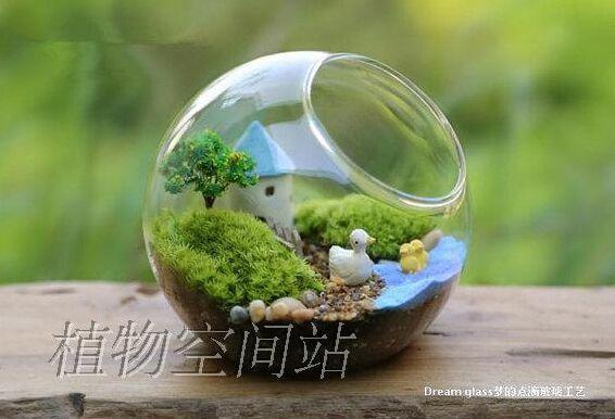 Glass Moss Orb Terrarium Air Plants Indoor Garden