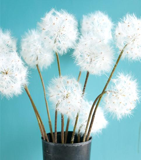 2017 hot sell usa high imitation artificial dandelion wedding  party  birthday  home decorative