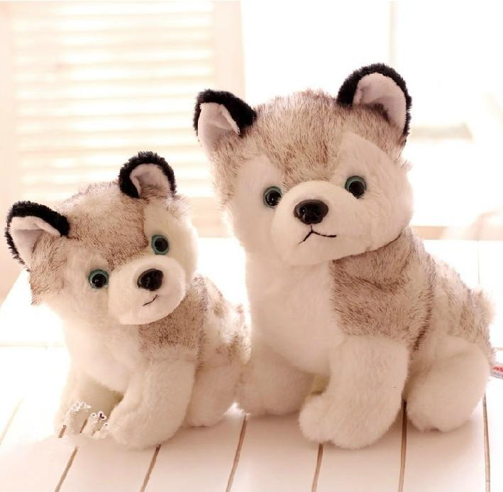 Gorgeous Pomsky Puppies Craigspets - Hot Girls Wallpaper