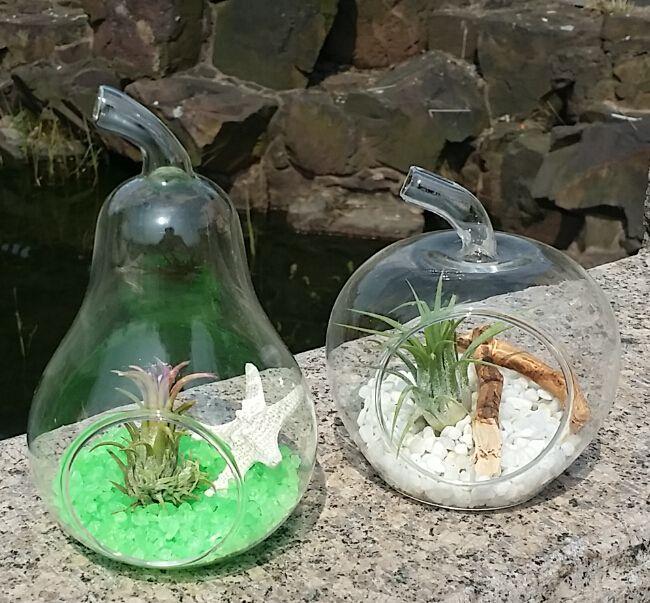 apple and pear shape glass succulent planter terrarium set. Black Bedroom Furniture Sets. Home Design Ideas