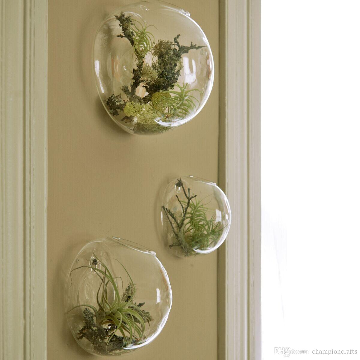 Glass air plants terrarums wall bubble terrarium fighting for Air plant decoration