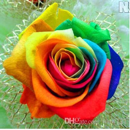 2017 sale rainbow rose 100 seeds perennials beautiful for Multi colored rose bushes