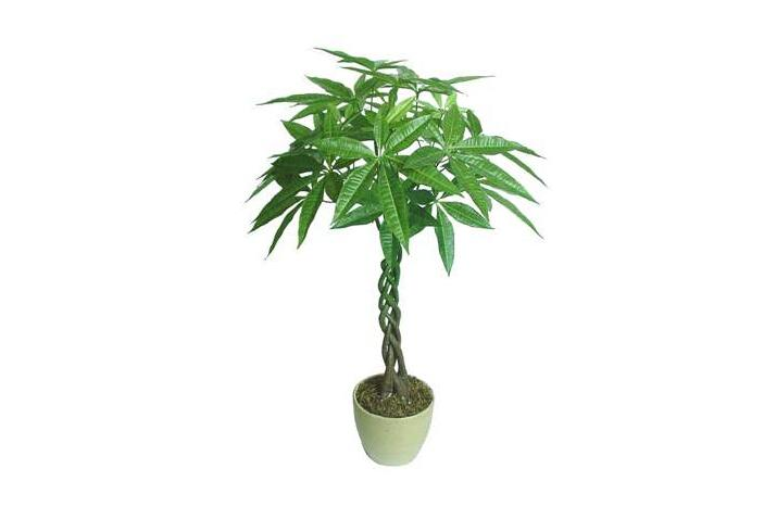 Decorative Tree Potted Plant