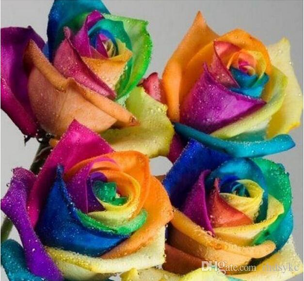 Online cheap creative rainbow rose seeds multi colored for Multi colored rose petals