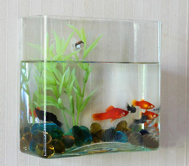 wall glass aquarium fish tank container transparent vase