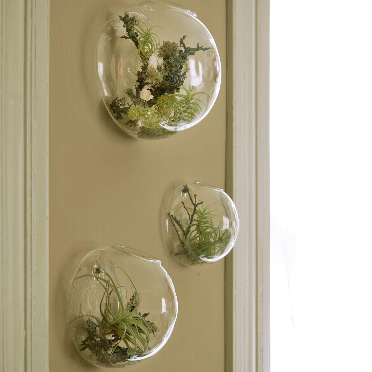 Air plant wall glass terrarium wall bubble terrarium wall for Glass home decor