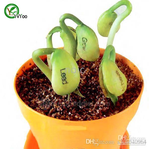2017 Bonsai Plant Magic Bean Seed Gift Plant Growing