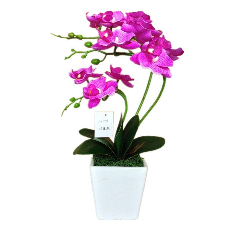 50pcs Phalaenopsis Orchid Plant Erfly Potted Seeds Indoor Flowers Bonsai Home Garden