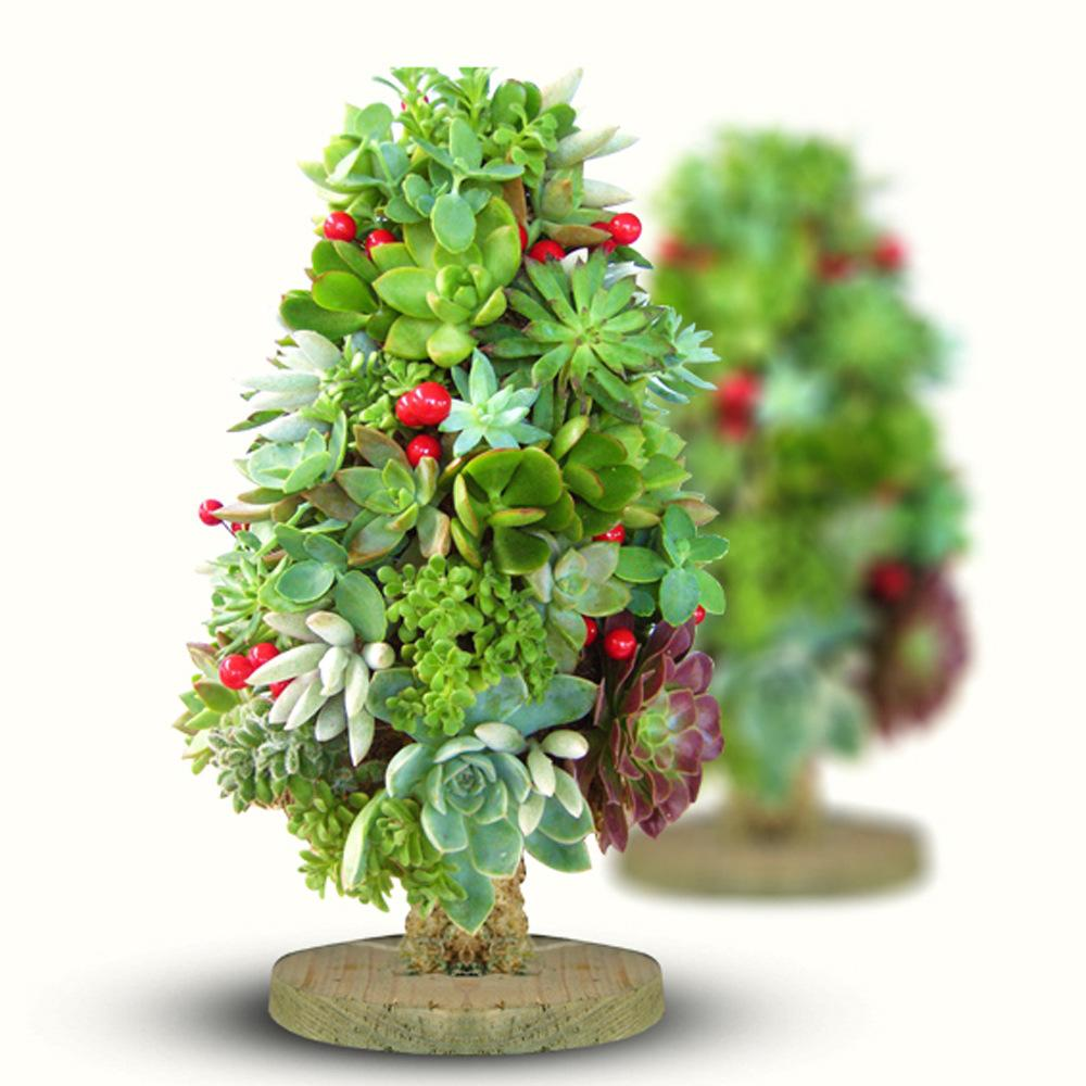 2017 New Arrival Diy Christmas Tree Shape Planter With Natural ...