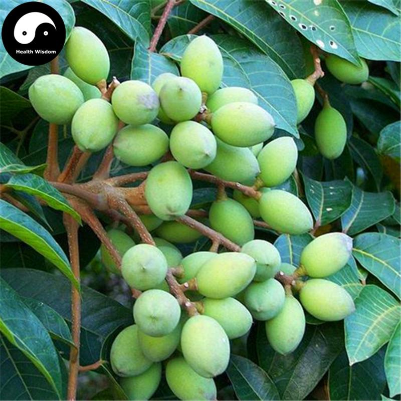 buy chinese white olive tree seeds plant canarium album raeusch, Beautiful flower