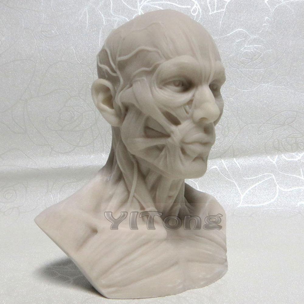 wholesale white 1: 3 human skeleton anatomical model for, Skeleton