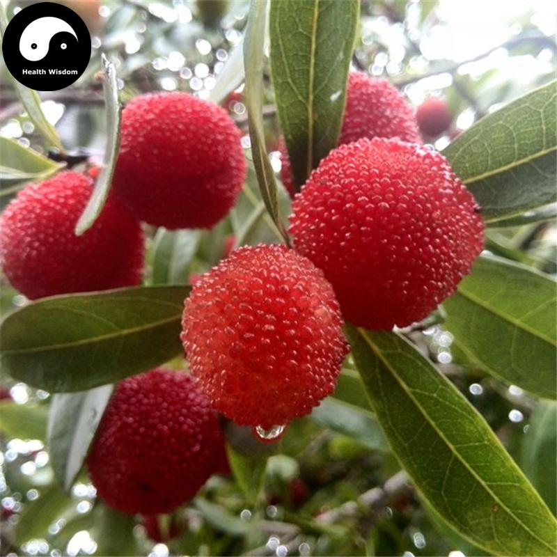 buy real strawberry fruit tree seeds plant chinese red bay grow, Beautiful flower