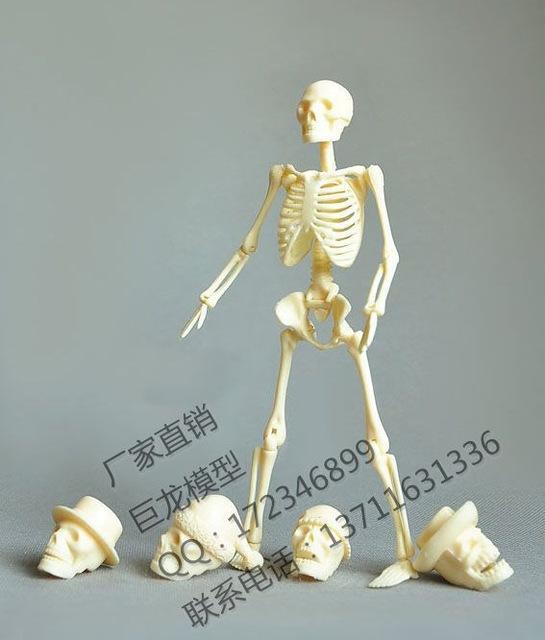 2017 wholesale human body 20cm assembling skeleton model, Skeleton
