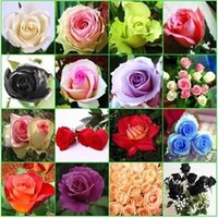 New 9 COLORS ROSE SEEDS Rainbow purple Red Black Red White Y...