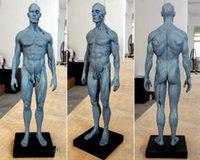 human skeleton sale reviews | human skeleton sale buying guides on, Skeleton