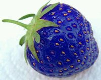 Fruit seeds blue strawberry seeds DIY Garden fruit seeds pot...