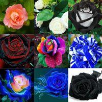 Wholesale New Varieties Colors Rose Rose Flower Seed 10 Colo...