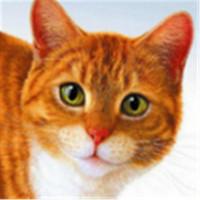 YTG 5D Diy Diamond Живопись мультфильм животных крест стежка Симпатичные кошки круглый Rhinestone дрель алмазов вышивка ремесел или личных подгонять