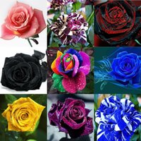 2016 Rose Seeds Charming 10 Colors 100 Seeds Per Package Hom...
