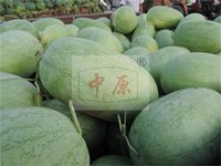 Wholesale 50g Green Paper lazy oval watermelon watermelon green watermelon seeds Kangbinglvlanhan