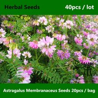 Herb Seeds astragalus plants - Family Fabaceae Astragalus Membranaceus Seeds Very Popular Astragalus Propinquus Seeds Flowering Plant China Medicine Huang Qi Seeds