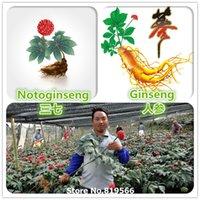 Cheap 100% Real Chinese Panax Ginseng Notoginseng Seeds Renshen Tianqi Sanqi Sementes Home Bosain Rare Herbs Garden Plants