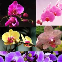 Wholesale Hot New Rare Mix Color Phalaenopsis Flower Seeds Bonsai Plant Butterfly Orchid Yard Decoration