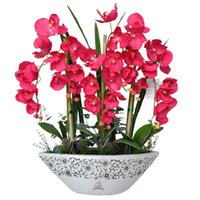 Wholesale 24 Types Perennial Phalaenopsis Orchid Flower Seeds Professional Pack Seeds Pack Rare Butterfly Orchid Seeds Z00469