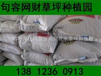 Wholesale Private courtyard garden plant green selection of high fescue seed