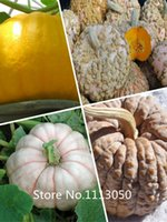 atlantic giant seeds - New Arrival Vegetable seeds seeds Atlantic Giant Pumpkin Seeds Garden Seeds