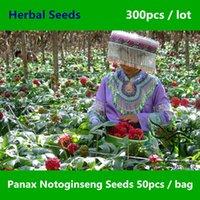 Cheap notoginseng seeds Best ginseng seeds