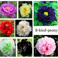 beautiful peonies - Peony Seed Color Black Red Yellow Pink Green Blue Purple White Pack Each Pack Seeds Beautiful Peony Foloer Seeds