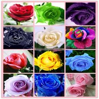 Wholesale Free Shipp Colourful Rainbow Rose Seeds Purple Red Black White Pink Yellow Green Blue Rose Seeds Plant Garden Beautiful Flower seeds