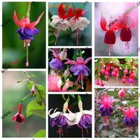 alias - fuchsia flower Alias lantern flowers and Hanging Begonia Shaped like an inverted bell flowers seeds bag