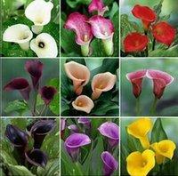 Семена цветущие Цены-Калла лилии семена бонсай дома DIY семена цветов семена мяч красочные цветы семена шаров