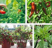 Wholesale Garden Plant top sale bag Hot mixed hot pepper including Ghost Peppers Chili Rare Sowing Bhut Jolokia Balcony Vegetable S