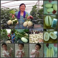 baby meats - Super Sweet Lily s Heirloom Melon Seeds high yield thick meat fruit seeds for your lovely babies