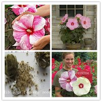Wholesale 100PC Giant Hibiscus Flower Seeds Hardy Mix Color DIY Home Garden potted or yard flower plant bonsai flowers
