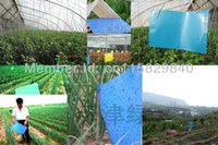 beetle trap - Blue Traps Sticky Board Catching Insects Killer Aphid Whitefly Thrip Gnat Fruitfly Leafminer