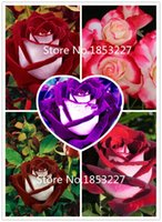 Wholesale 2015 Hot Sale Rare Osiria Rose Seeds Chinese Rose Flower Seeds Lover Birthday Gift Rosa Semillas de Flores