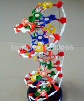 atomic structure model - DNA double helix model DNA double helix structure models plastic Atomic structure diagram laboratory equipment