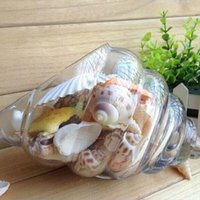 Wholesale Bag Of Mixed Beach Shells Display Wedding Home Decoration Natural Crafts Starfish Assorted Sea Shells Craft Decor