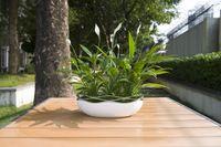 Wholesale A flower pot