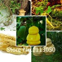 Cheap ginseng seeds Best herbaceous seeds