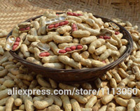 arachis hypogaea - Arachis hypogaea seed crop four red peanuts delicious looking food seed about particles